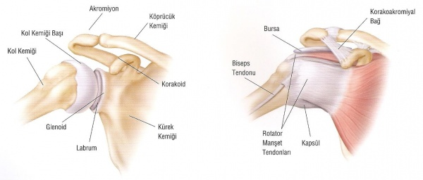 Omuz Artroskopisi - Şenol Akman